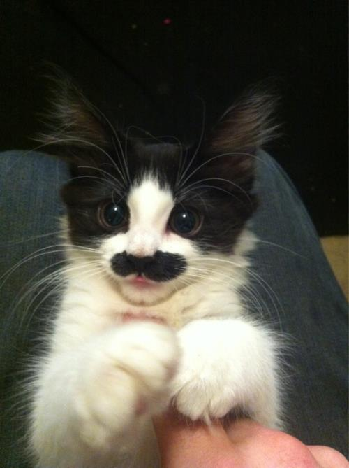 This is mustache kitty. You're welcome.